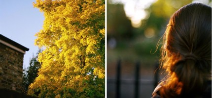 autumndip1